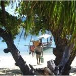 Découverte d'une ile paradisiaque à Madagascar