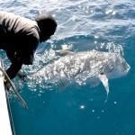 Remise à l'eau lors de la pêche à Madagascar